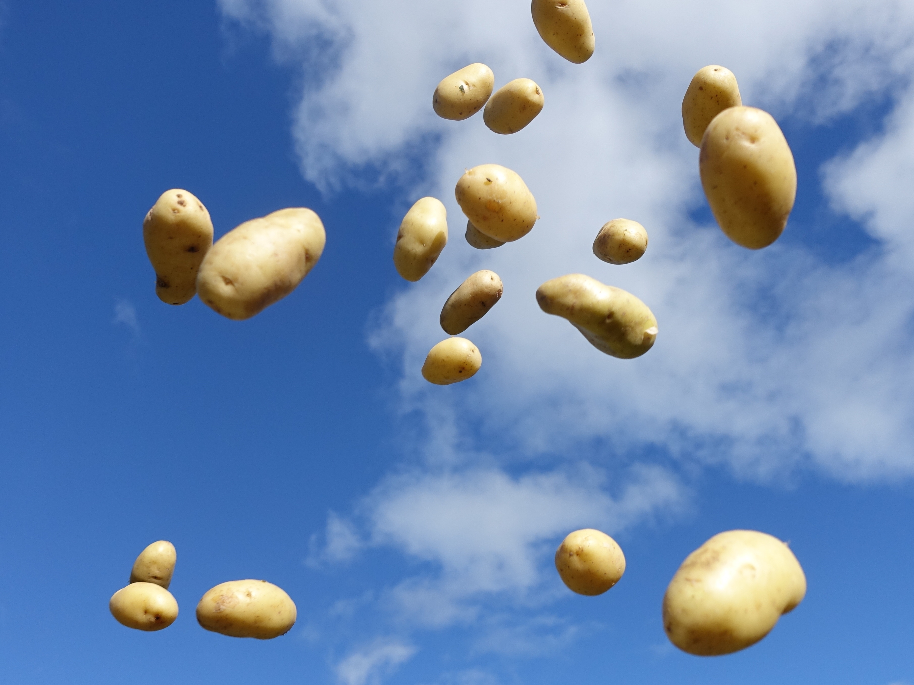 flying potatoes 2 © KIM JONKER