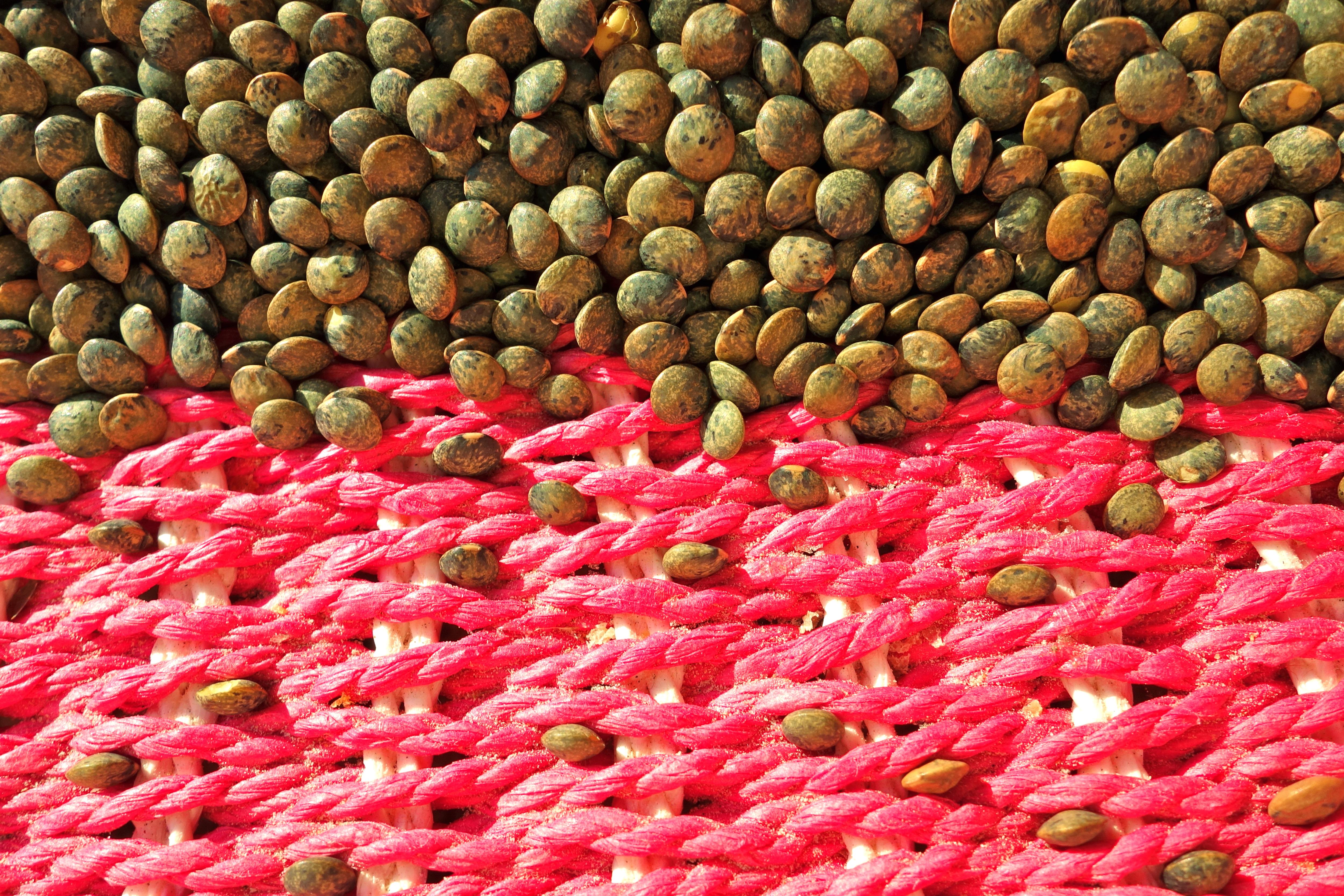 L.S.12 green lentils © KIM JONKER