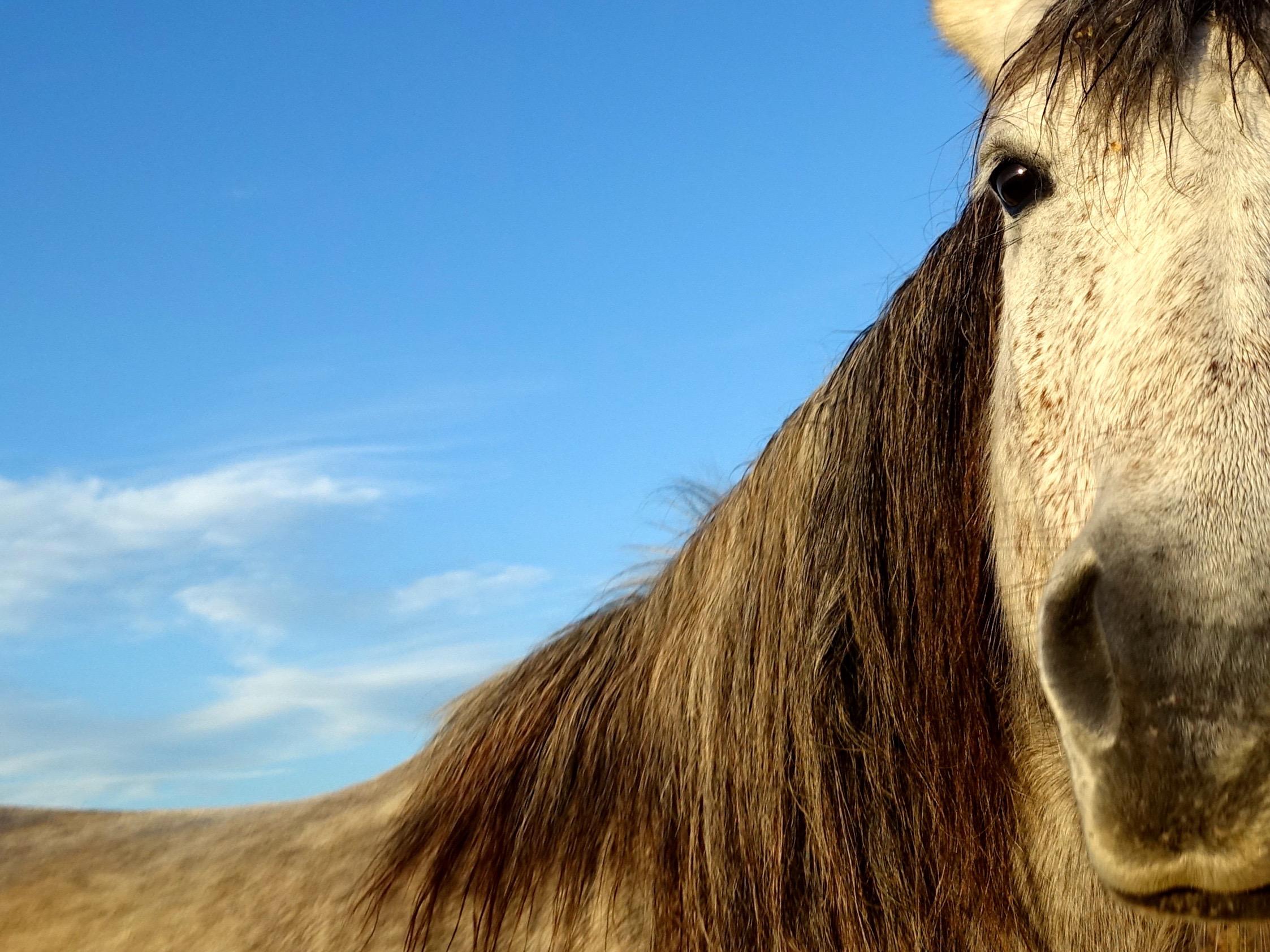 horse 7H © KIM JONKER - copie 2