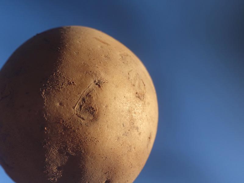 potato © KIM JONKER